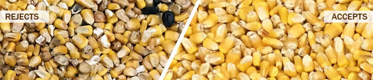 Satake RGBR Sorting Corn Demo Comparison